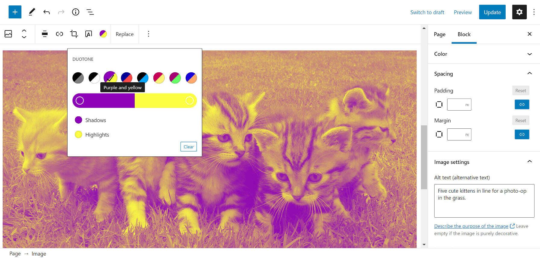 kittens-yellow-purple
